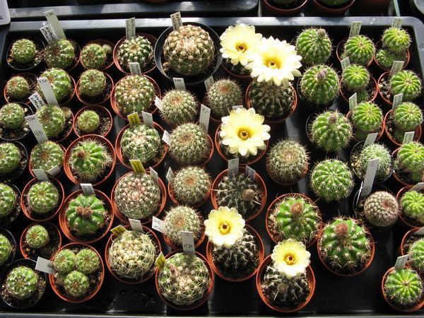 zur ck zur startseite vom kaktus point bilder foto29. Black Bedroom Furniture Sets. Home Design Ideas