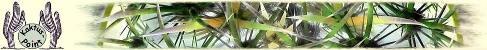 Kaktus-Point